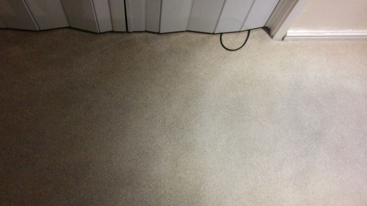 domestic carpet cleaning N22